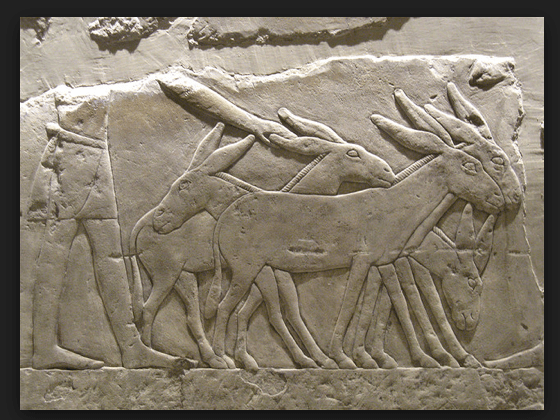 Donkey Frieze from Egypt