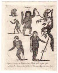 New World, Asian, and African Primates