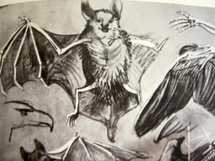 die Fledermaus