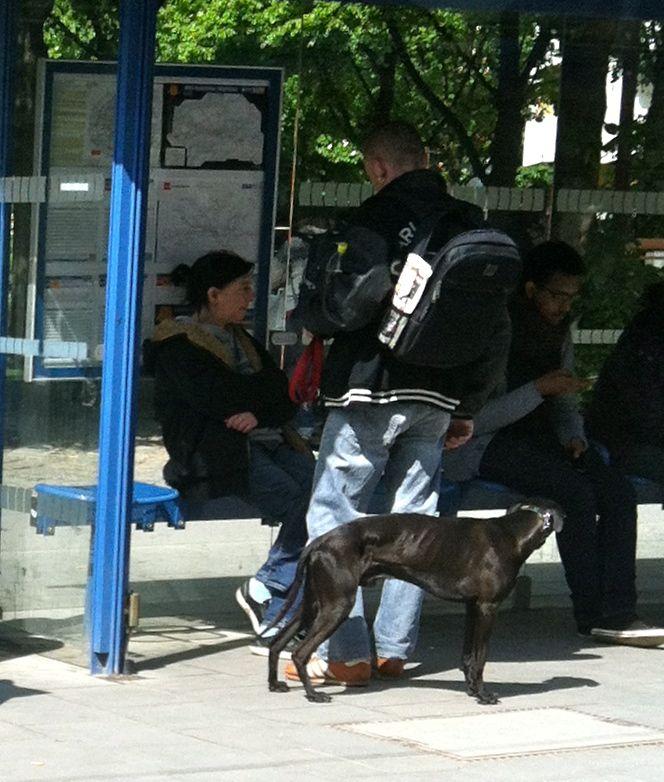 MVV / MVG Hunde von München 6