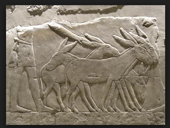 Donkey Frieze from Egypt